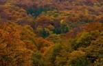 Есенно платно